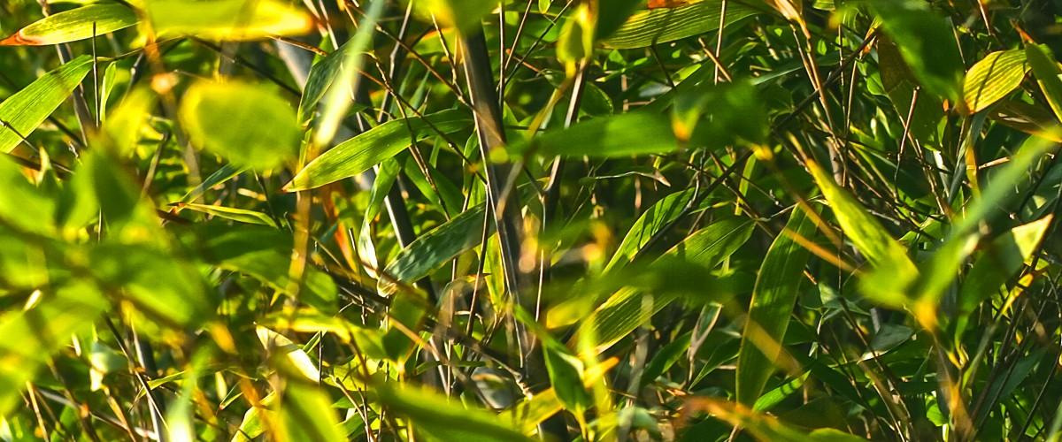 img-arbuste